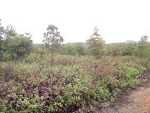 西乡塘300亩农场土地招租,春季时节租金大实惠。