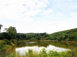 江南区江西镇500亩土地招租,可做种植行业、养殖行业