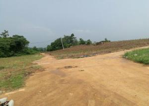 武鸣区450亩土地出租或分租或合作